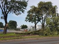 Burza w Łodzi. Powalone drzewa, gałęzie na drogach, zalane ulice.