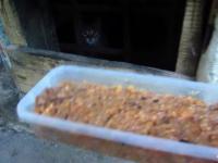 Pomaganie dzikiemu małemu kotku uwolnić zaklinowaną łapkę