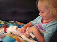 Płaczący szczeniak chce dostać się do swojego małego przyjaciela