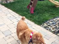 Pies który nie potrafi złapać jedzenia w locie