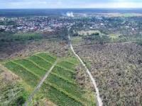 SKUTKI NAWAŁNICY BORY TUCHOLSKIE DRON TRAGEDIA NIE MA LASÓW !!!!!