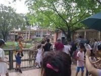 karmienie żyraf w chińskim zoo