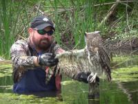 Uratował sowę uwięzioną w stawie