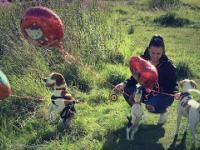 Epicka zabawa z psami w chowanego