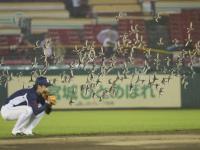 Jaskółki poziom Azja: Stado ptaków przejęło stadion i trzeba było zakończyć mecz
