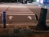 Kot czekający grzecznie na zielone światło