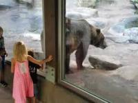 Bardzo źle wychowany niedźwiedź grizli