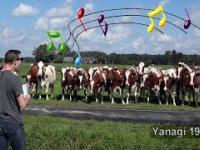 Zaklinacz krów powraca. Kolejny wybekany koncert