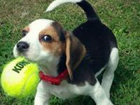 Dwa popsute psy i piłka