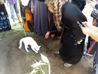 Kotek na pogrzebie właściciela