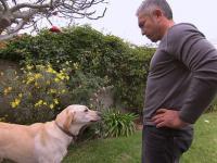 Zachowanie psa chwilę przed atakiem i po - analiza