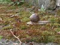 Dwie godziny z życia ślimaka