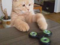 Подборка Спиннеры сводят котов с ума