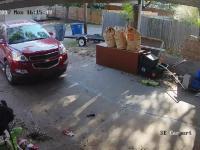Złodzieje przepędzeni przez właścicielkę domu i jej wściekłe psy