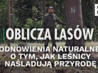 Odnowienia naturalne. O tym, jak leśnicy naśladują przyrodę | Oblicza lasów 37