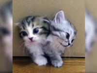 Pudełko produkujące kotki