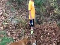 Pies zdziwiony zniknięciem swojego właściciela