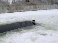 Kotek łapie rybkę