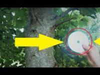 Muzyczne drzewo? Mega poryty filmik ;p