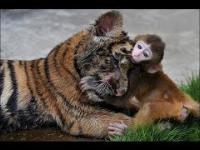 Niesamowite zwierzęta ratują inne zwierzęta
