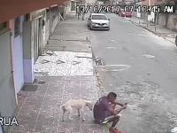 Walka o terytorium w Brazylii