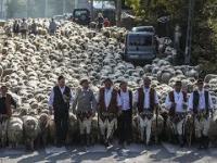 Bacowie, Juhasi i owce schodzą z hal. Jesienny redyk pasterski.