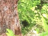 Jak szybko niedźwiedź wspina się na drzewo
