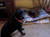 Koty kradną psom miejsce do spania