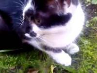 ŚMIESZNE KOTY Funny Cats