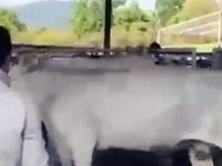 Kontratak krowy