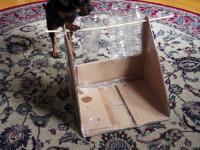 Sprytny pies rozwiązuje zagadki i łamigłowki