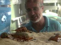 Morderczy ślimak zabójca, jak poluje?