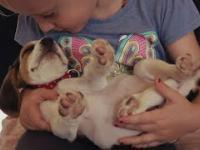 Szczeniaczek po raz pierwszy w swoim życiu spotyka dziecko