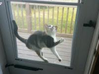 dziwne kotki z których UŚMIEJESZ się do ROZPUKU