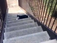 Reakcja kota na