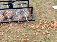 Wielogłowicowa maszyna do zbierania orzechów