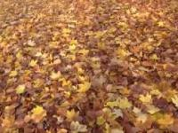 Park Dendrologiczny jesienią.