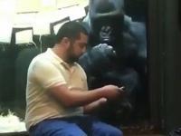 Gdy twój goryl wybiera ci laski na Tinderze