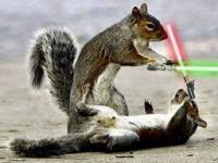 Wiewiórki Jedi!