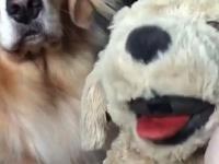 Jak sprawdzić czy pies jest zazdrosny