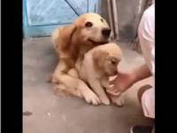 Zostaw go...
