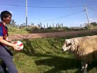 Nowy Messi trenuje główki
