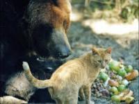 Niesamowita Przyjaźń Między Zwierzętami