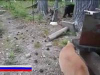 Rosyjski kot obronny
