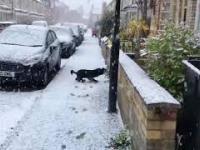 Wielka radość psa po spotkaniu z pierwszym śniegiem