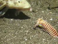 Takie potwory istnieją i żyją na dnie oceanu