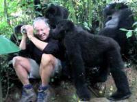 Dotknięty przez dzikiego goryla górskiego