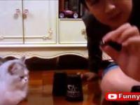 Bardzo spostrzegawczy kot gra w trzy kubki