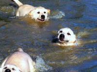Psi ojciec z dużą cierpliwoscią uczy swoje pociechy pływać