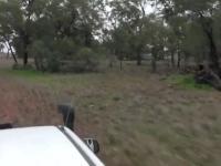 Oto oryginalne wideo faceta, który uderzył Kangura, by uratować swojego psa